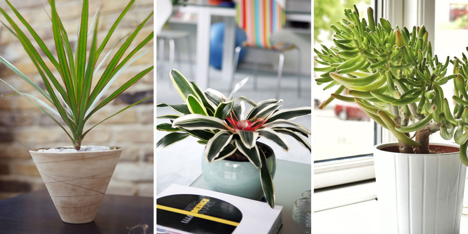 5 plants that can help improve air quality in your home plants that remove vocs - Plants can improve ambience home ...